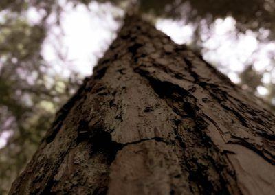 Waldpädagogik Kunterbunt gesund